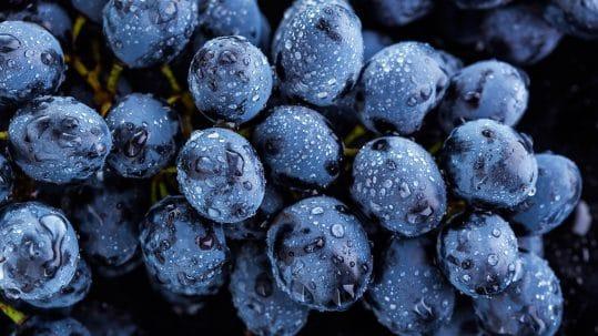 grapes after rain