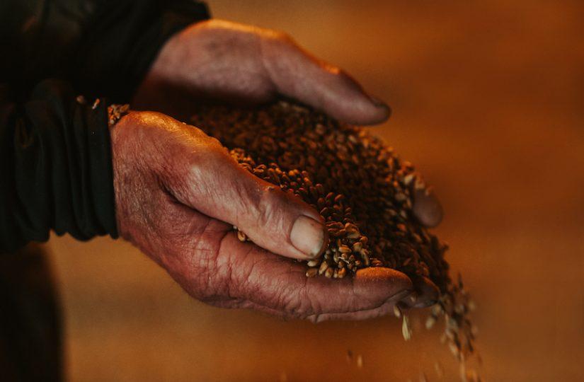 Leslie hands & grain
